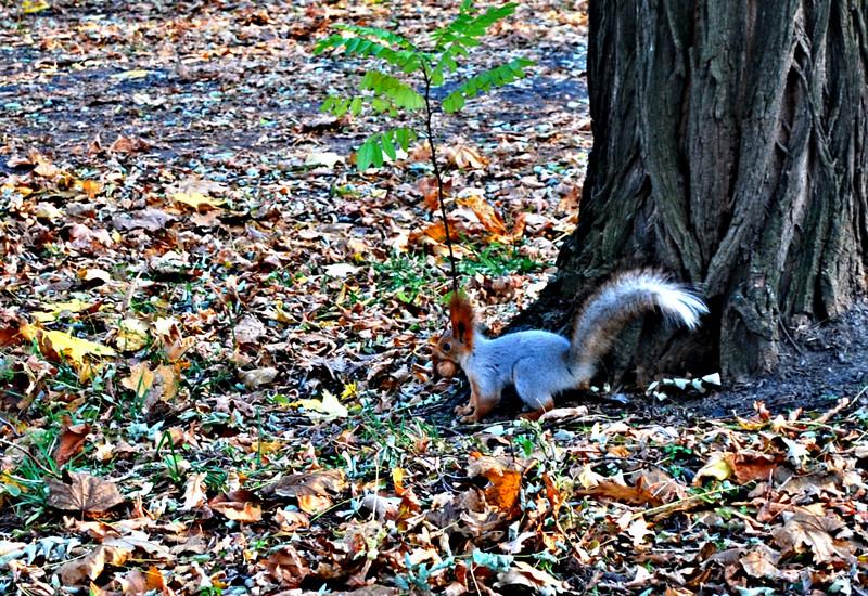 осень картинки животные готовятся к зиме уютный торжественный